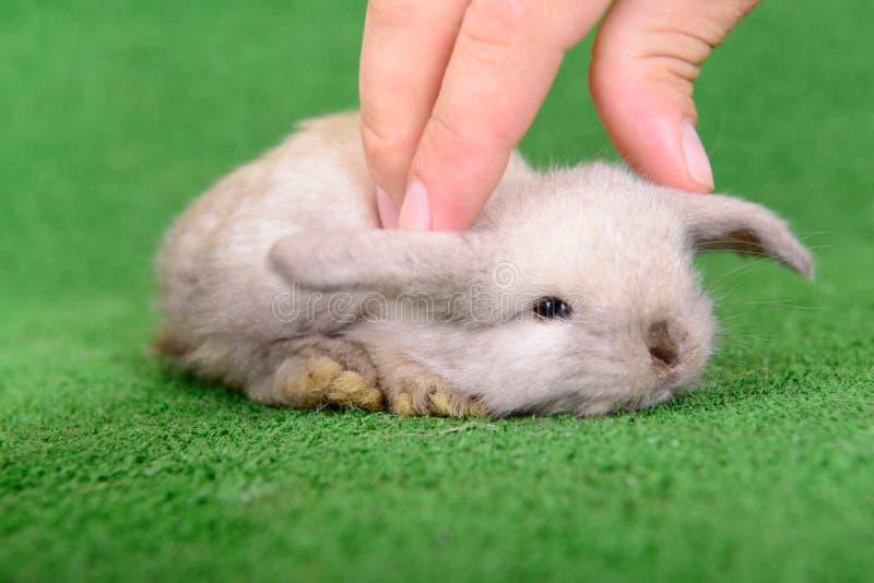 Download Little newborn rabbit stock image. Image of farm, little - 32008739