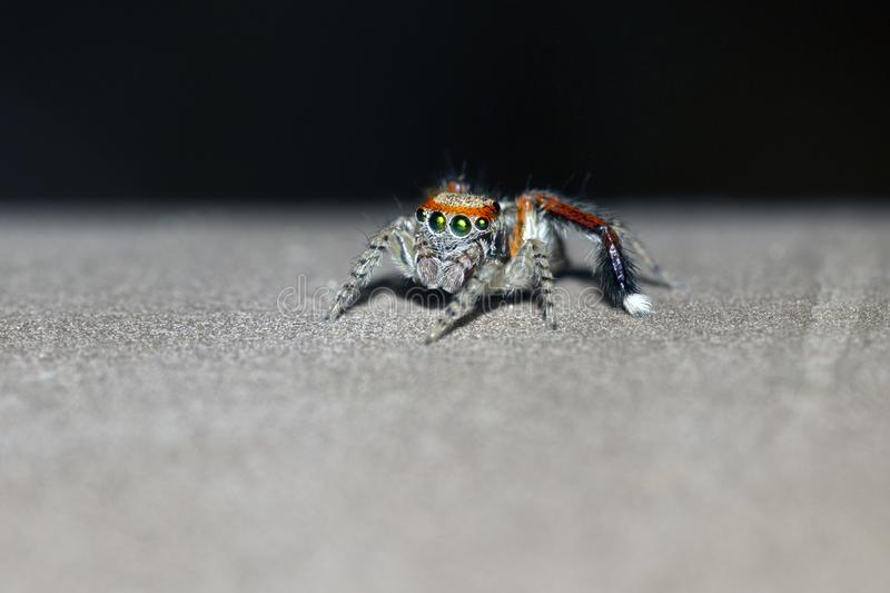 Little orange and brown spider. On a brown object macrophotography royalty free stock photography