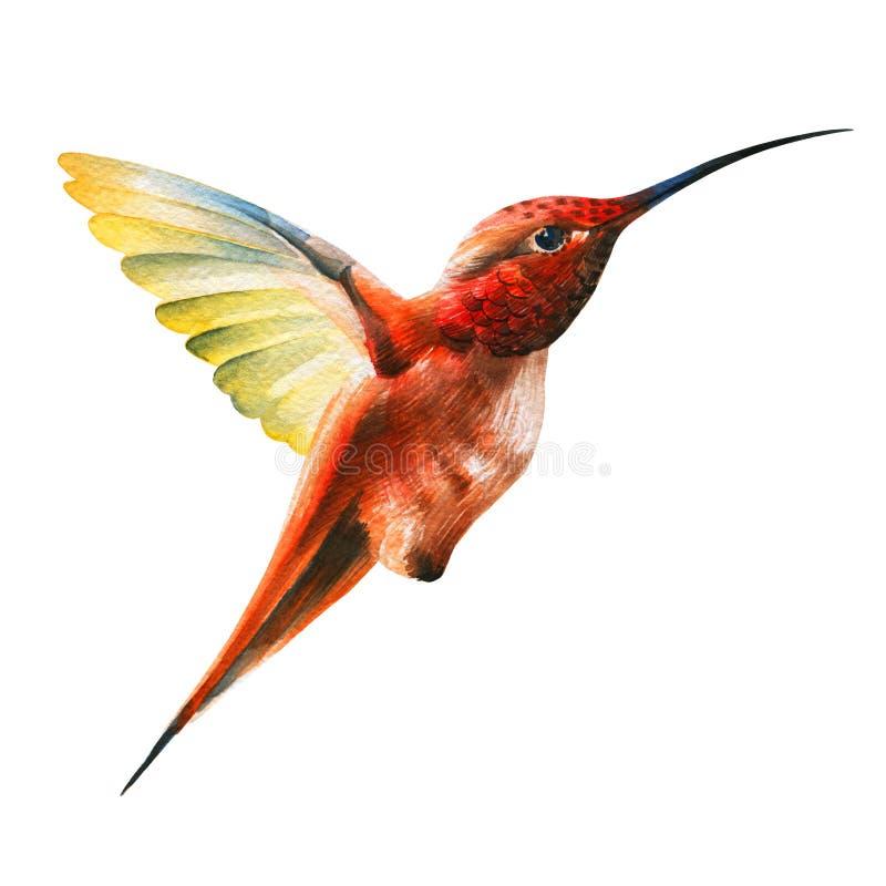 Little orange humming bird in flight royalty free illustration
