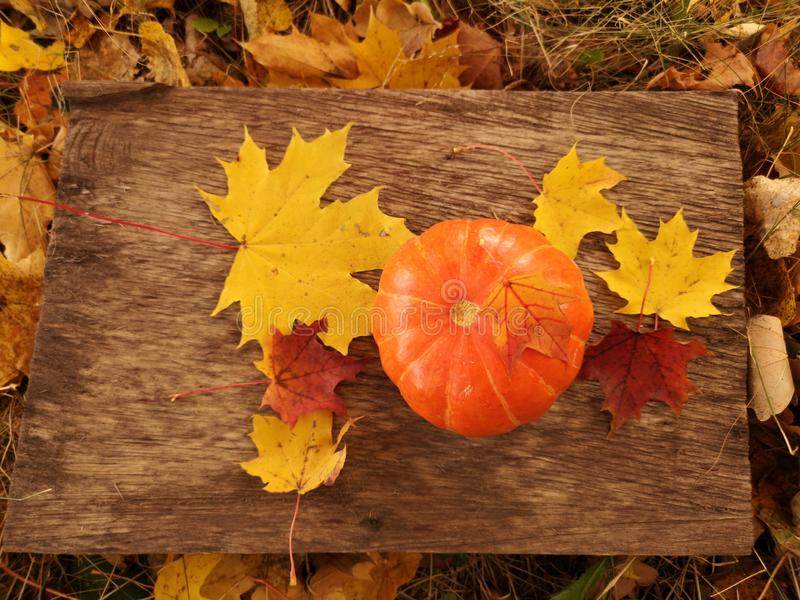 Little orange pumpkin in front of Halloween stock image