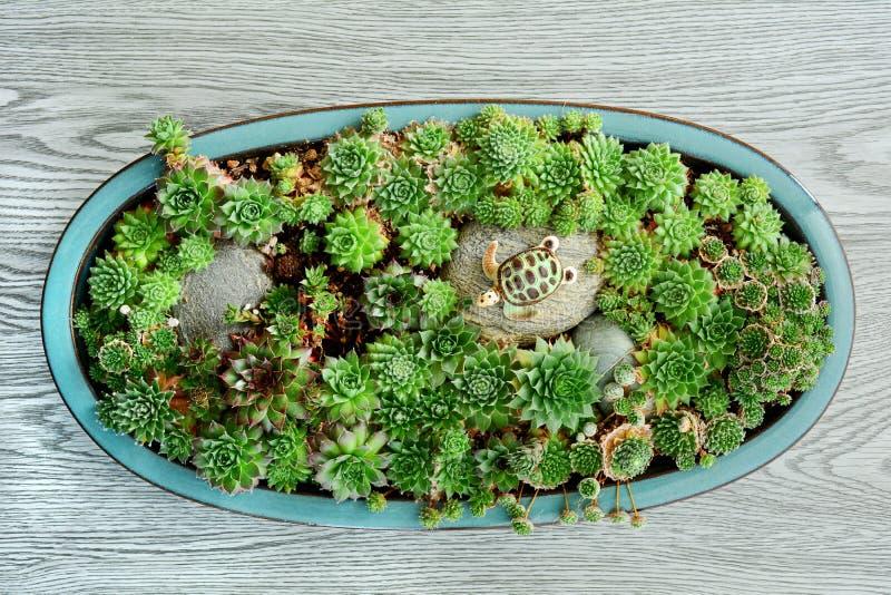 Succulent Garden Rock Stock Photos Download 3 949 Royalty Free