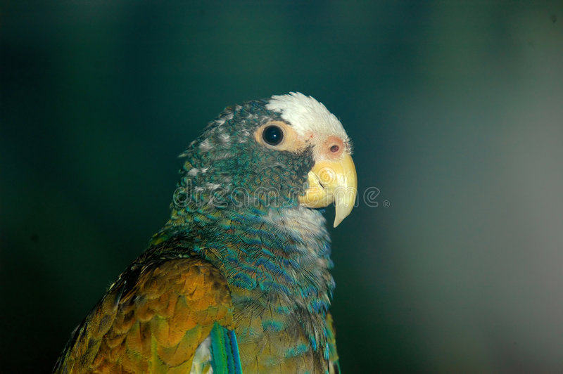 Little parrot royalty free stock photos
