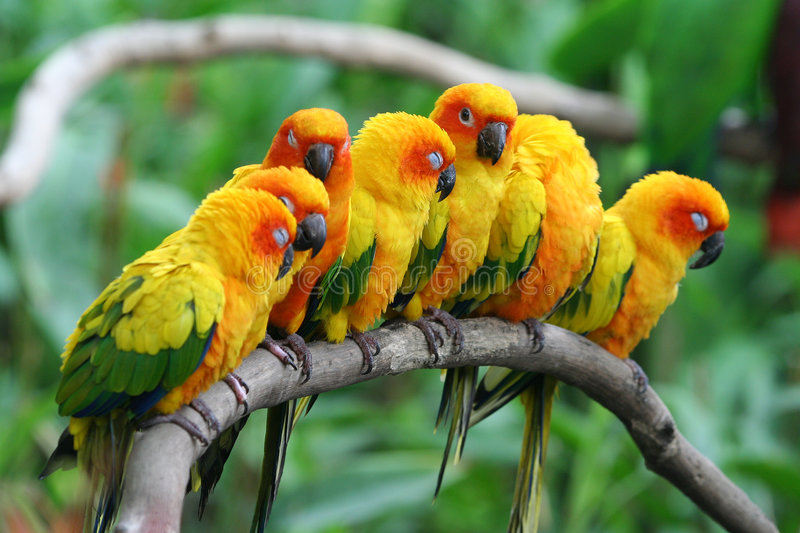 Little Parrots. royalty free stock photos