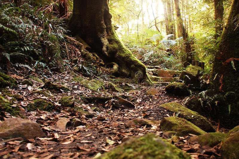 Little path in Australian rain forest royalty free stock images