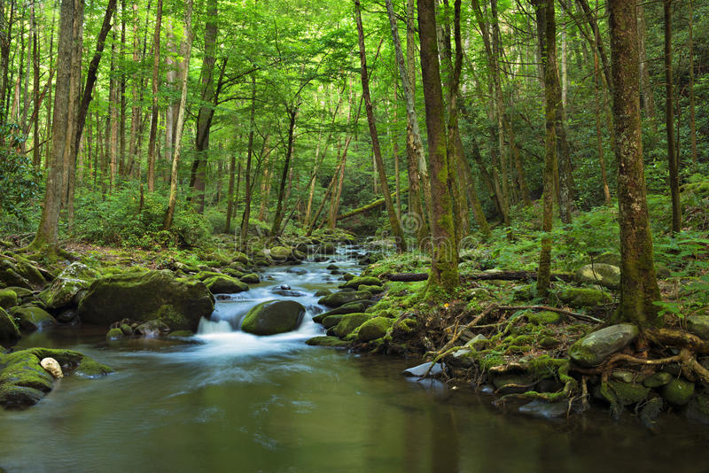 Little Pigeon River. Water cascades over boulders covered in green moss. Smoky Mountains National Park royalty free stock images