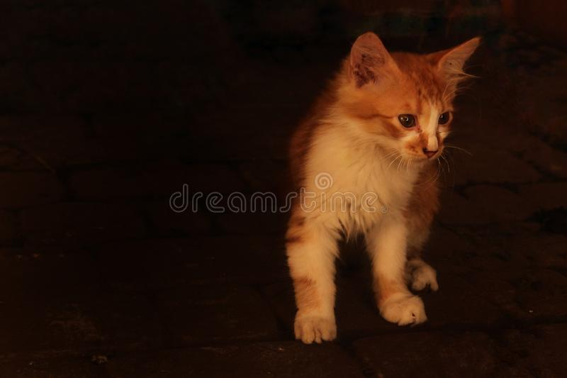 Little piggy cat in search of a house. stock photography