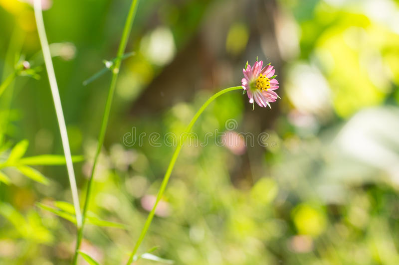 Little Pink Flower royalty free stock images
