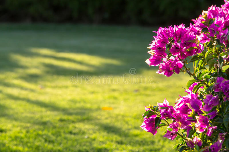 Little pink flowers on a bush close up stock photo image of small download little pink flowers on a bush close up stock photo image of small mightylinksfo