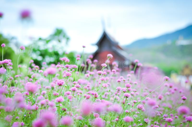 Little Pink flowers. Small flowers are lovely and beautiful stock images