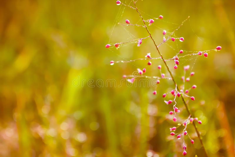 Little pink grass flower fresh spring nature walpaper backgr. Little pink grass flower fresh spring nature useful for walpaper background royalty free stock image