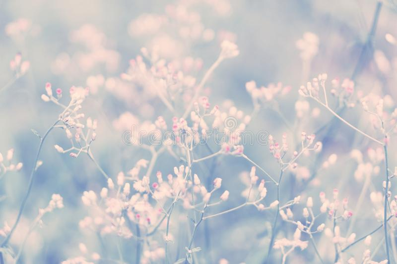 Little pink and white grass wild flower ,Abstract spring nature royalty free stock images