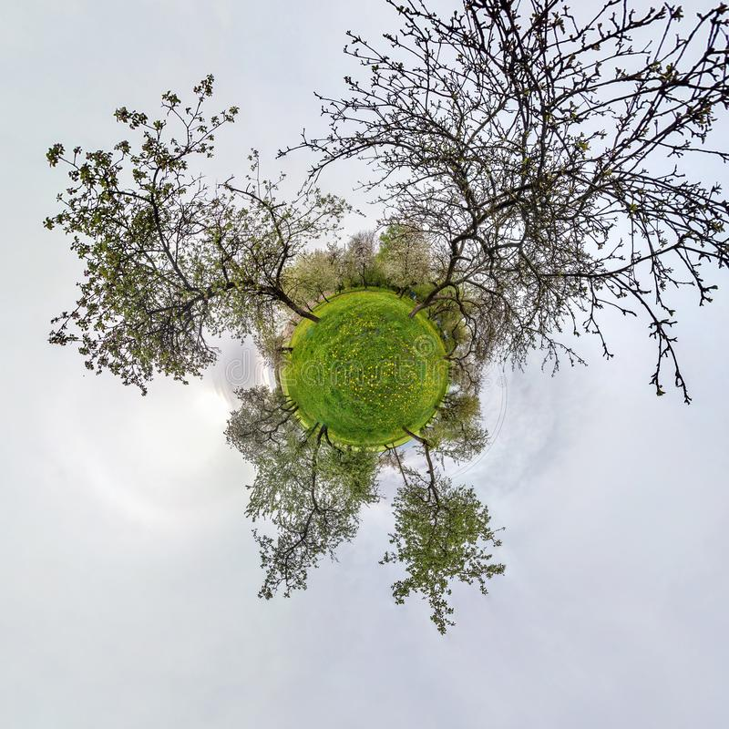 Little planet spherical panorama 360 degrees. Spherical aerial view  in blooming apple garden orchard with dandelions. Curvature stock illustration