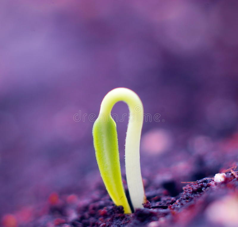 Little plant royalty free stock photo