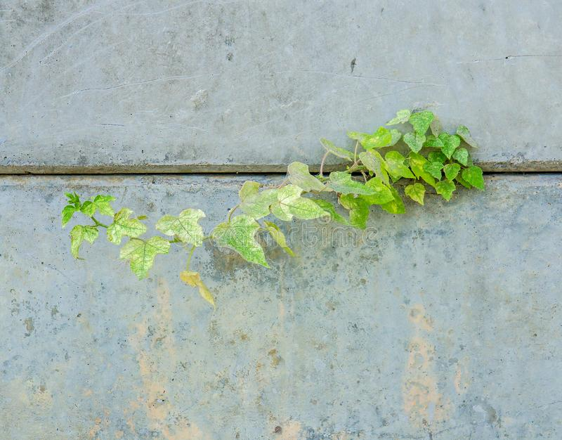 Little plant based on niche of concrete wall royalty free stock images