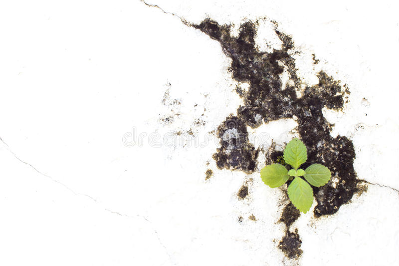 Little plant based on niche of white wall. Close up image stock image