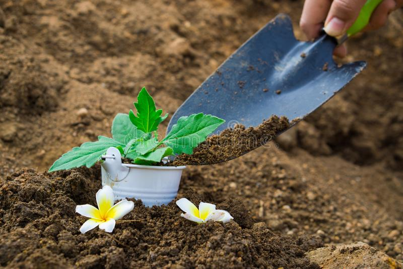 Little plant in the bucket with the hand shovel and spade held by one hand. Earth day. World environment day. Ozone day royalty free stock photos