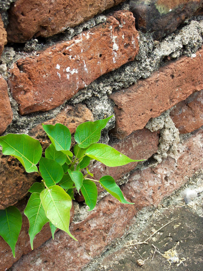 Little Plant. Growing in Lopburi historical park , Thailand stock photos