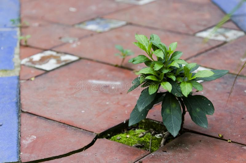Little plant growing between the tiles stock photos