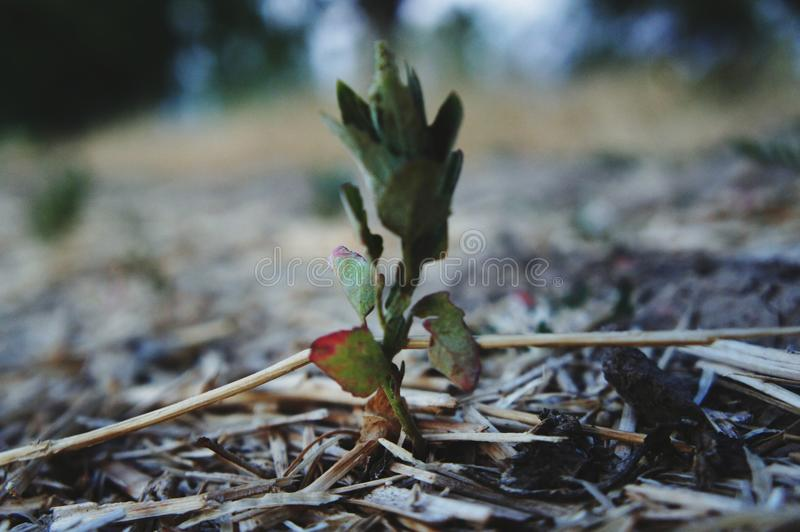 Little plant. A little plant on the ground stock photos