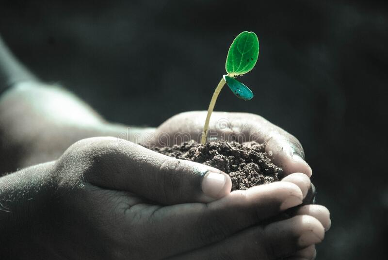 Little Plant Free Public Domain Cc0 Image