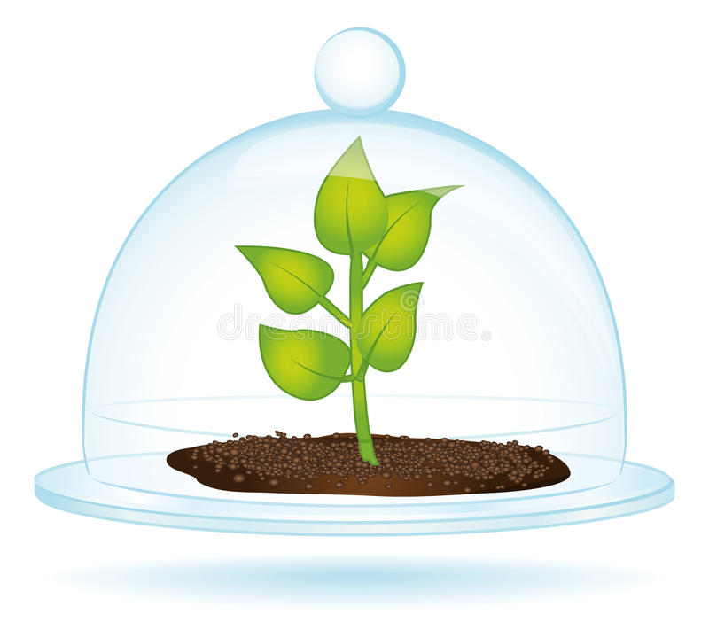 Little plant under a glass bell. royalty free illustration