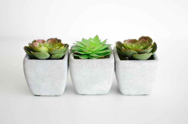 Little plants royalty free stock images