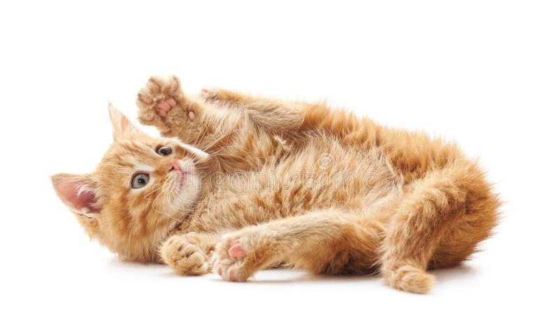 Little playful cat. A little playful cat on a white background stock image