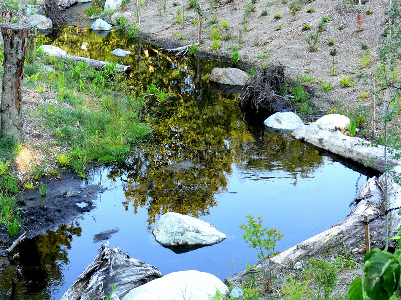Little Pond royalty free stock photography