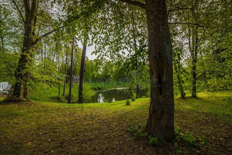 Little pond in forest, charming spring royalty free stock photos