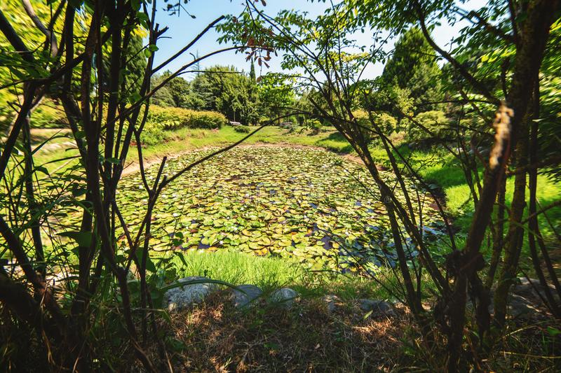 Little pond with water lilies at Karaca arboretum in Yalova, Turkey. It`s a beautiful garden with Mediterranean plants, divided into several thematic zones stock photo