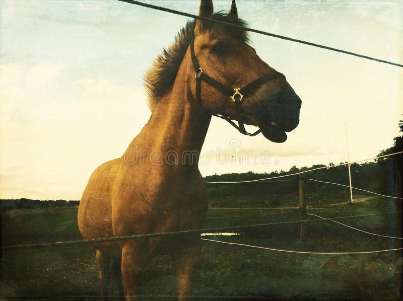 Little pony stock image