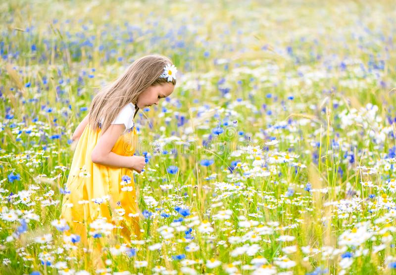 Little pretty girl in yellow Russian dress picking flowers in field of wild flowers on summer day stock photos