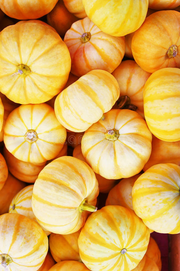 Download Little pumpkin stock photo. Image of wholesale, material - 14003950