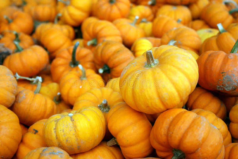 Little pumpkins royalty free stock images