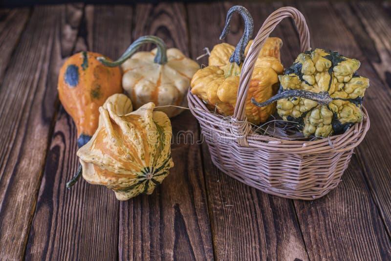 Little pumpkins in a basket. stock photos