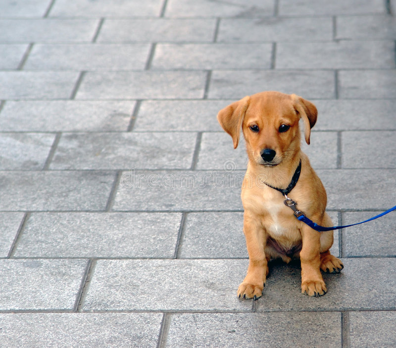 Little puppy. Sitting on the pavement stock photography