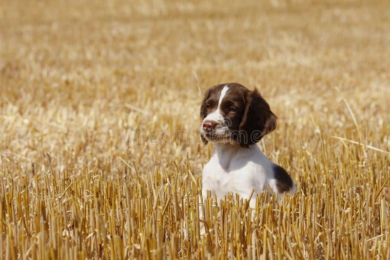 little puppy стоковое изображение