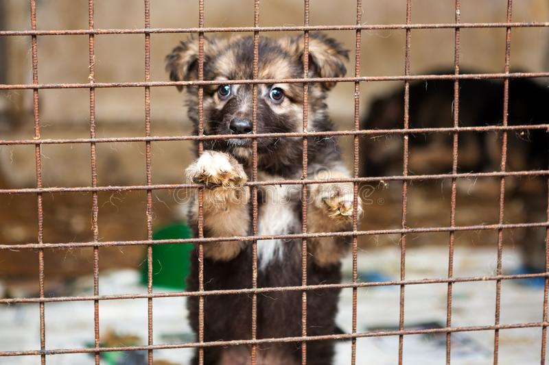 Little puppy in a cage of a shelter royalty free stock image