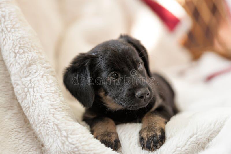 Little, sweet  puppy enjoy on soft blanket. Little puppy careless enjoy on soft white blanket royalty free stock photo