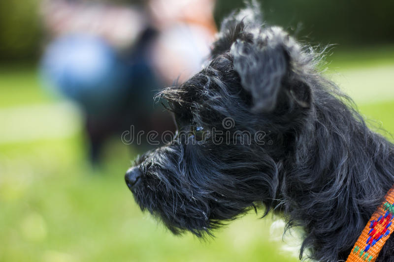Little puppy close up. To the camera royalty free stock photos