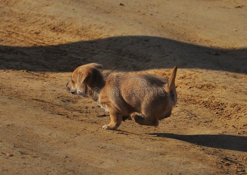 Little puppy. Little cute puppy running through the dirt road stock image