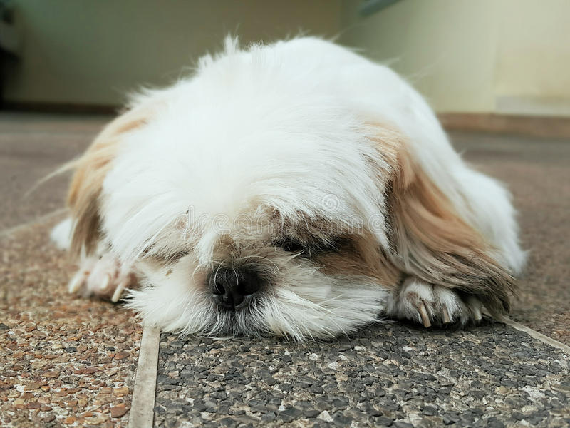 Little puppy dog. Sleep royalty free stock photos