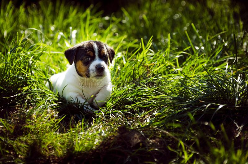 Little puppy dogs playing outside royalty free stock photo