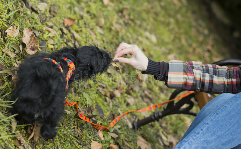 Little puppy feed. Little puppy eats food from the hand royalty free stock photography
