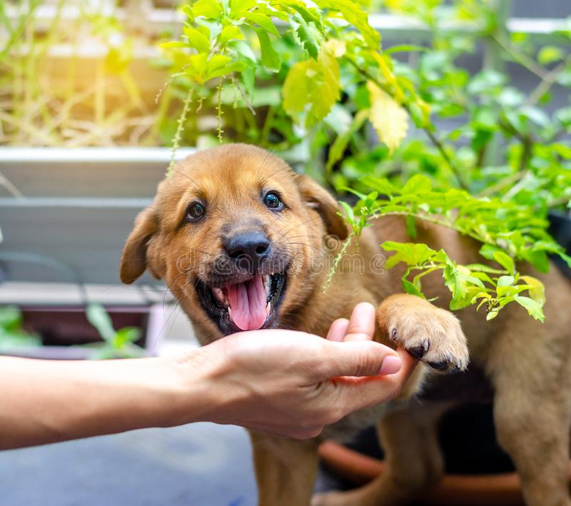 Little puppy giving its paw touch to a hand. The concept of trust and friendship.  royalty free stock images