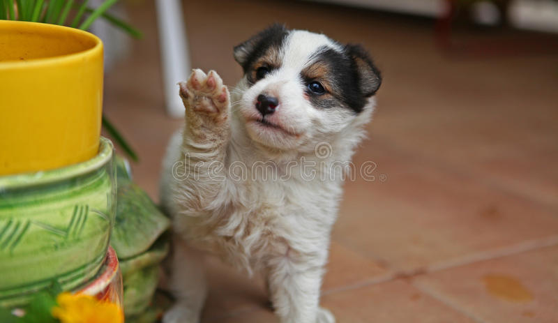 Little puppy. With inocent look stock images