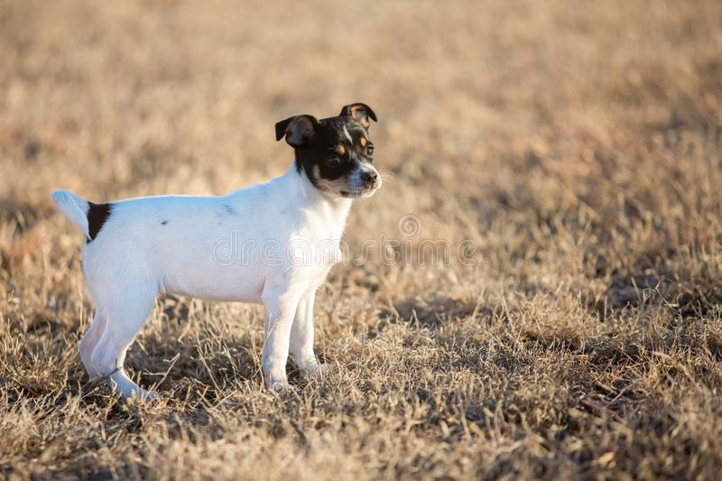 Little puppy outdoors stock photography