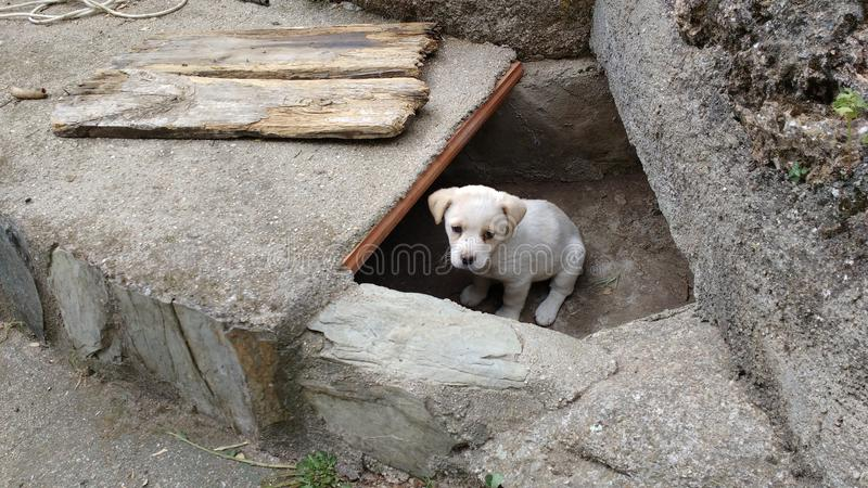 The little puppy ovserva from its hole. The little puppy ovserva from his hole and wants to play and attract attention stock photos