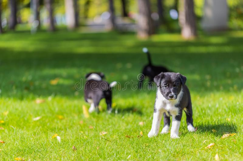 Little puppy playing in grass and having fun outdoors stock photography