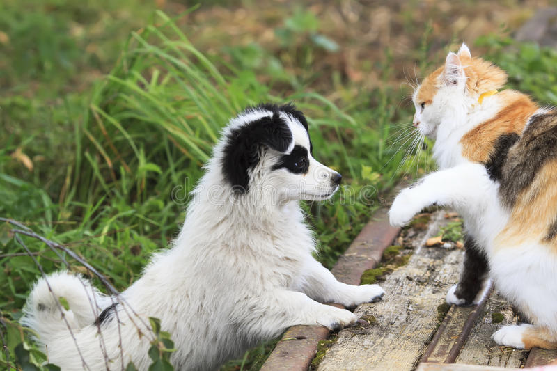 Little puppy plays with cat on the street in the summer. Funny little puppy plays with cat on the street in the summer stock image